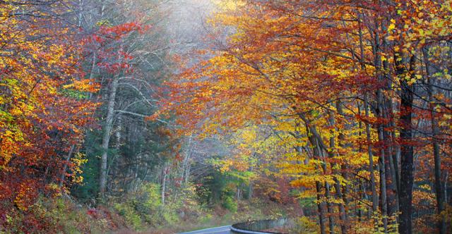 Premières couleurs d'automne : premiers signes de problèmes?